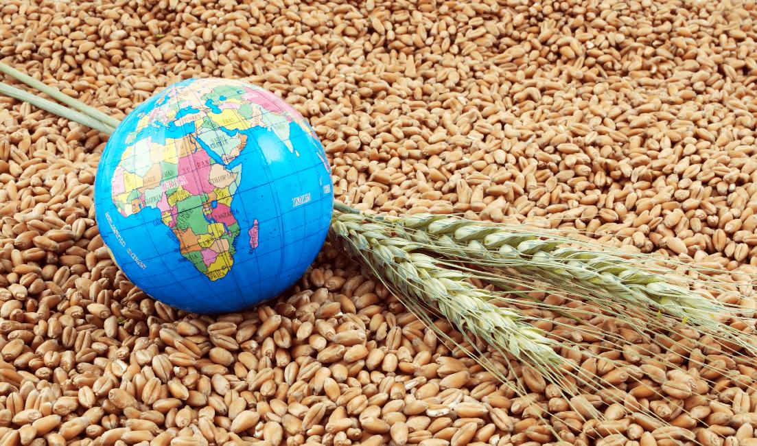 Food Security MCQ